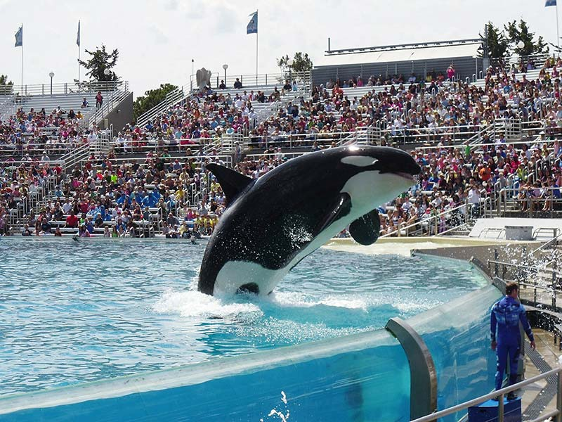 Orca Show at SeaWorld